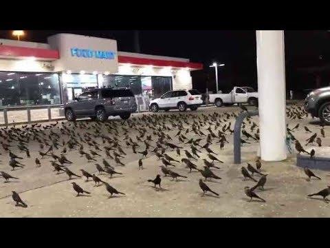 ¿Algo grande está por suceder en Houston Otra vez? Miles de aves invaden una gasolinera 2018