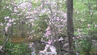 Haydn Oboe Concerto Slow Movement