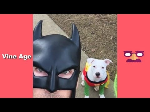 Funny BatDad Vines Compilation (w/Titles) All Vine of BatDad - Vine Age✔
