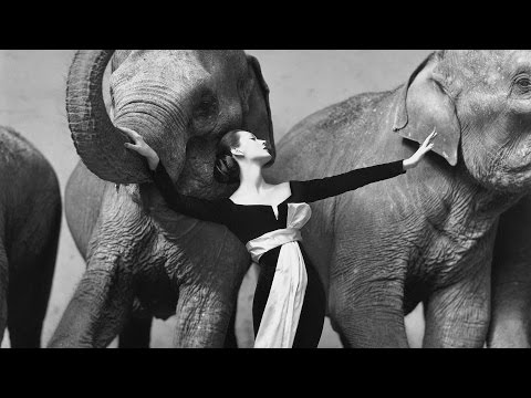 Richard Avedon :: Dovima with Elephants