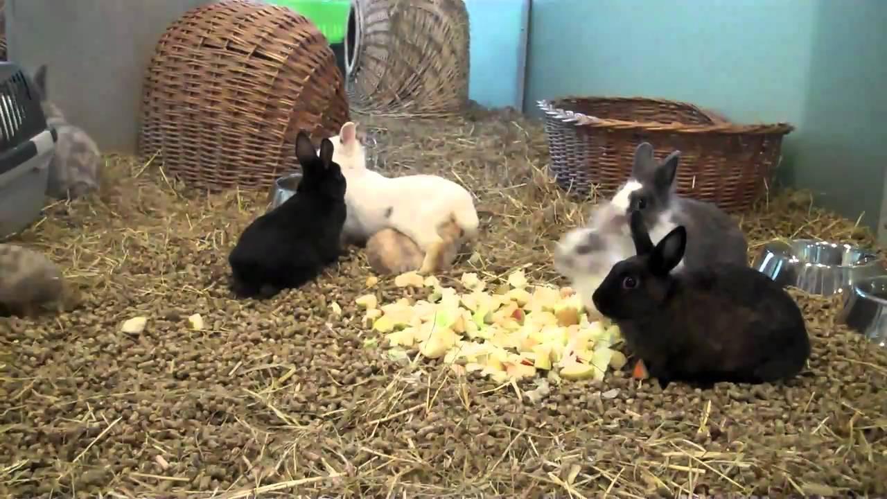 110 kaninchen aus einer wohnung im tierheim berlin youtube. Black Bedroom Furniture Sets. Home Design Ideas