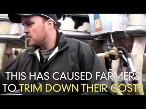 THOUSANDS OF DAIRY FARMS ARE CLOSING DOWN