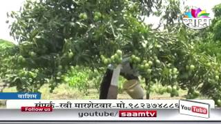 Ravi Marshetivar's zero budget natural mango farming success story