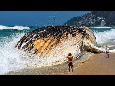 7 Самых Больших Морских Существ, Которых вы Когда-Либо Видели