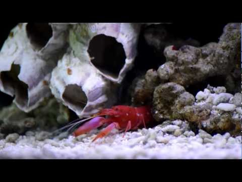 My marine  aquarium
