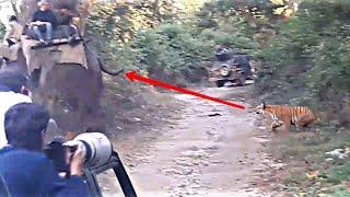 Tiger attack elephant and safari riders in jim corbett national park dhikala!!!!