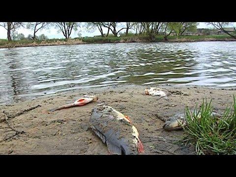 екологічний стан та очищення озера ялпуг Мишки, Ноутбуки, Наушники
