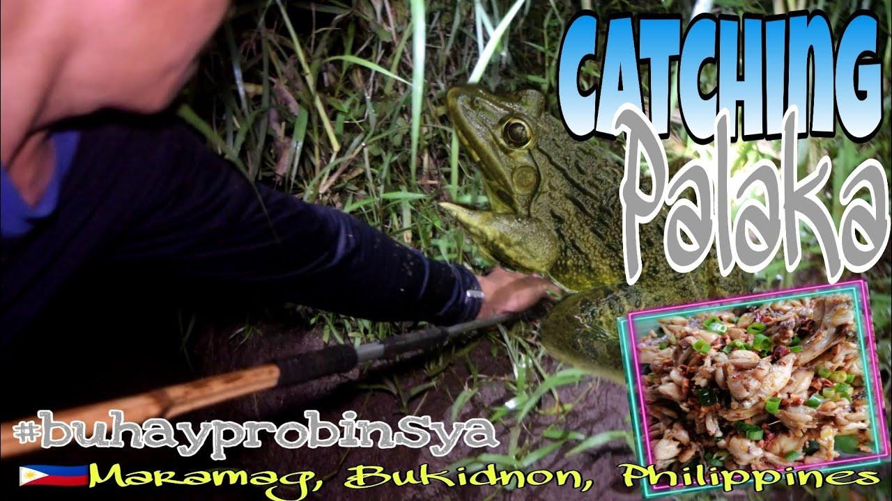 Catching Palaka , Sobrang MALALAKI | Garlic Buttered Frogs | BUHAY PROBINSYA EP-46 | BUKIDNON