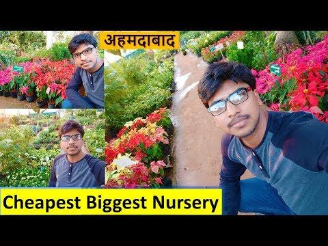 Flower Plants Est Gest Nursery