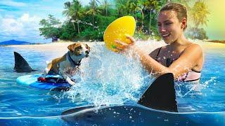 Собака Джина на Море Аквапарк для Собаки Кипр Elli Di Pets