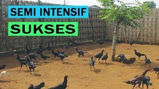Ternak Ayam Kampung Pemula Semi Intensif \x5bCARA \\u0026 PANDUAN\x5d Lengkap