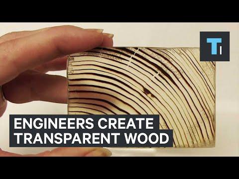 Engineers create transparent wood