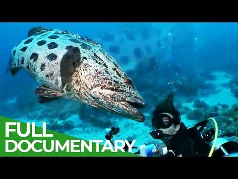 The Underwater Wonderland Of Australia   Free Documentary Nature