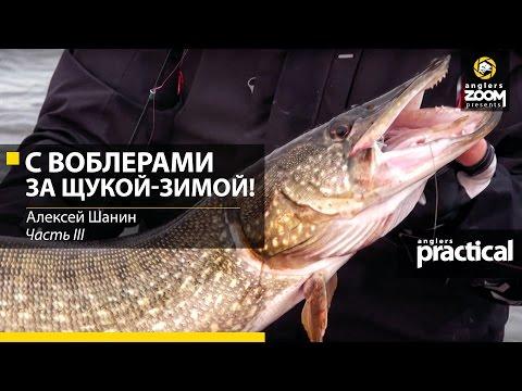 поклевки рыбы видео