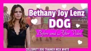 Actress Bethany Joy Lenz Dog, Heidi!  Celebrity Dog Trainer Nick White | Off Leash K9 Training