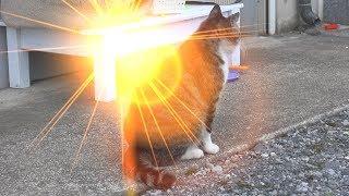 【猫】エフェクトDE遊ぶ Light Flares編 【Cat】 thumbnail