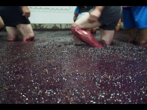 Making Port Wine in Portugal's Douro Valley