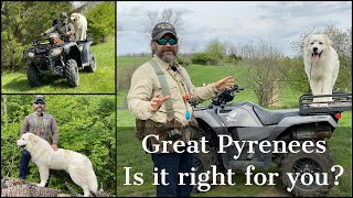 Great Pyrenees | Is It Right For You?
