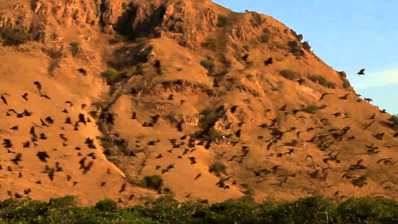 KOMODO NATIONAL PARK - Indonesia's Jurassic Park - Home of ...