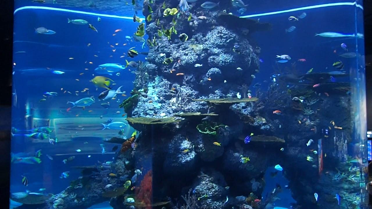 Sea Aquarium Singapore 2017 Tiket 08 Huge Giant Cylinder Tank You