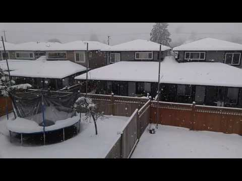 Snow Falling in Burnaby, British Columbia #1
