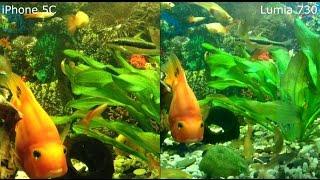 Сравнение видео Lumia 730 и iPhone 5C (аквариум)