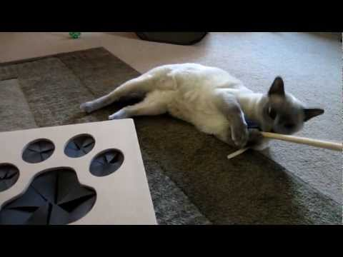 Tonkinese Play Time: Whack-a-Mouse Cat Toy [HD]