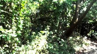 飛行樂園-紀華麟奇幻爵士鋼琴交響