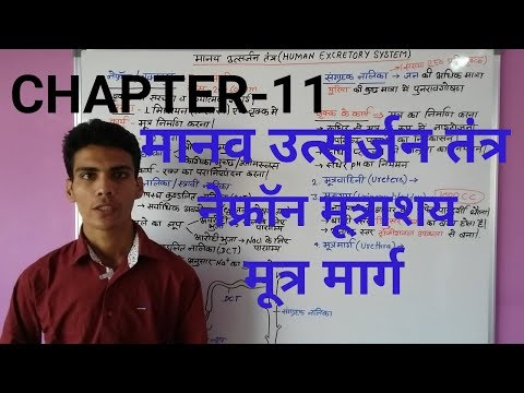 GENERAL SCIENCE|HUMAN EXCRETORY SYSTEM(नेफ्रॉन)PART-3 FOR UPSC, SSC, ALL STATE LEVEL EXAM