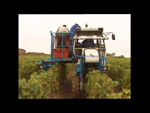 RECIT. Quand le Beaujolais a cédé à la tentation de la machine à vendanger - - France 3 Auvergne-Rhône-Alpes