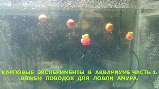Вяжем поводок для  ловли амура,карповые эксперименты в аквариуме часть 1.