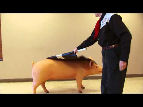 Proper Use of Livestock Driving Tools With Temple Grandin, Ph.D.