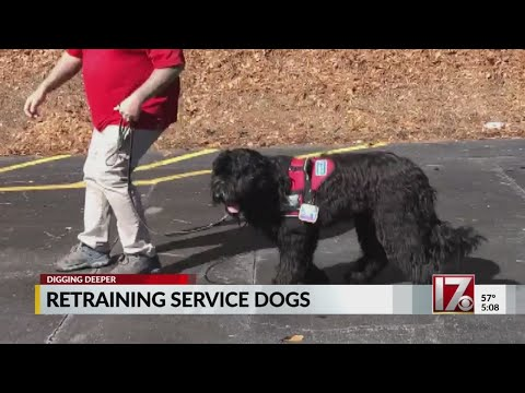 Pro dog trainer spending months re-training Ry-Con service dog, he says