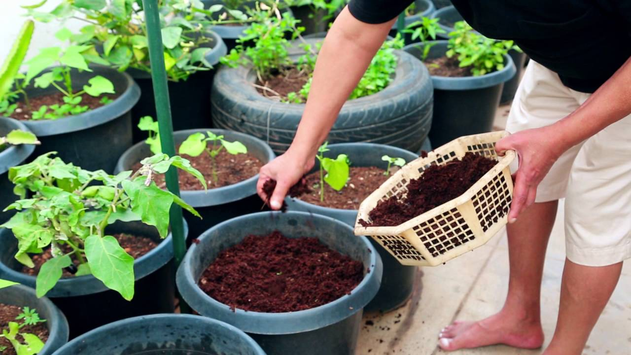 Terrace Garden | Easy Way To Grow Fruits U0026Spices Plants On Terrace Garden Harish  Mysore 6   YouTube
