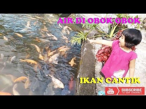 Air Di Obok Obok Joshua - Lagu Anak Populer - Video Ikan - Musik Anak Anak