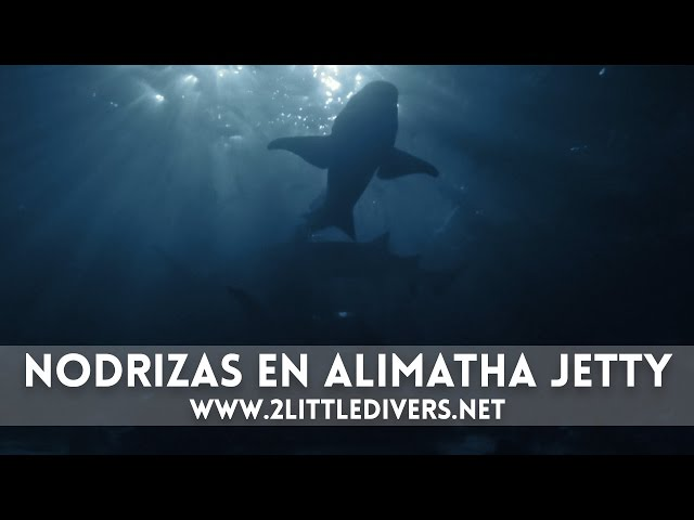 2 Little Divers | Alimatha Jetty - Maldivas Semana Santa 2015