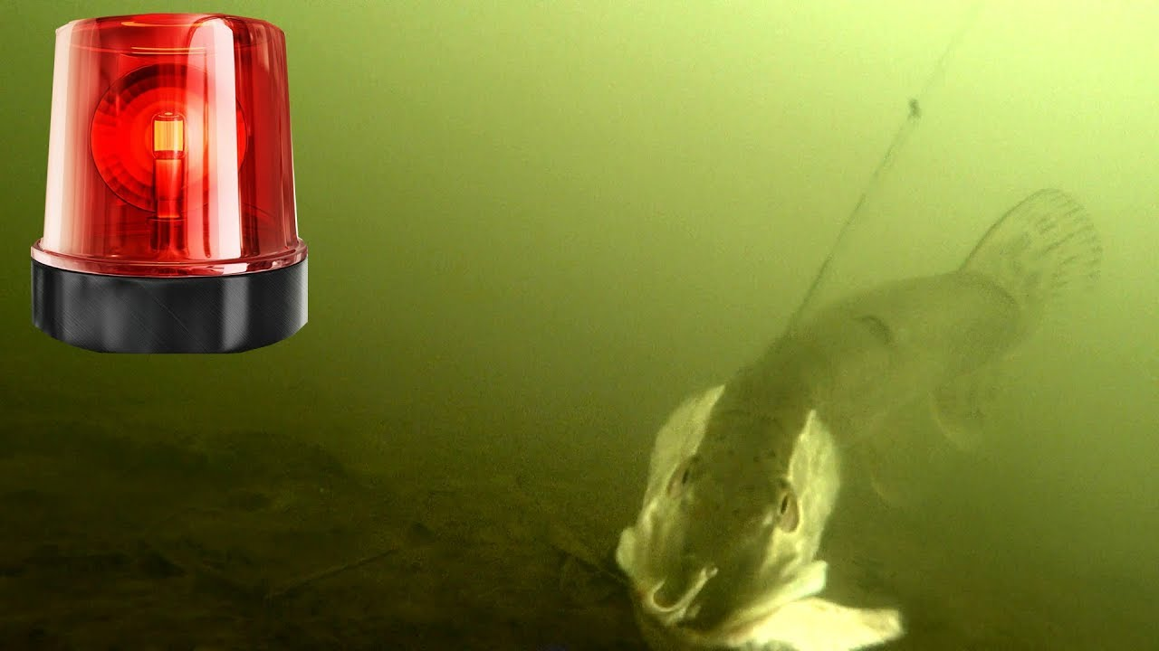 МИГАЛКА - ЗАМАНИЛА ЩУКУ! Атака щуки! Подводная съемка