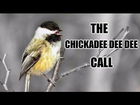 Chickadee-dee-dee Call