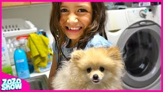 ZoZo Show | How to Train / Take Care of a Pomeranian Puppy for Kids