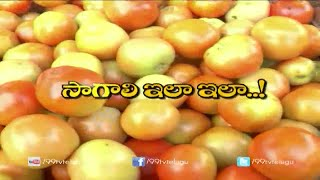 Cultivation Methods in Tomato || Eruvkak || 99tv