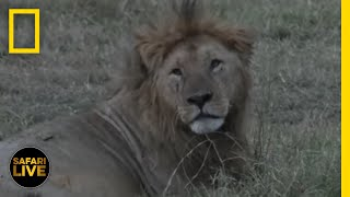 Safari Live - Day 210 | National Geographic