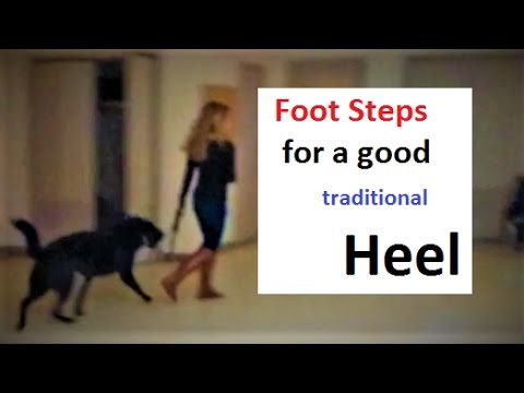 Heel Command Foot Work for Pause, Halt, and Go (K9-1.com)
