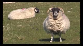 Шотландия 2. Мировой вояж. Выпуск 28 смотреть
