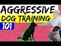 How to perform an Aggressive Dog Evaluation based on your dogs body language - Dog Training Advice