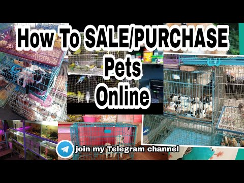How to sell/purchase your Pet's online  Join my Telegram group now