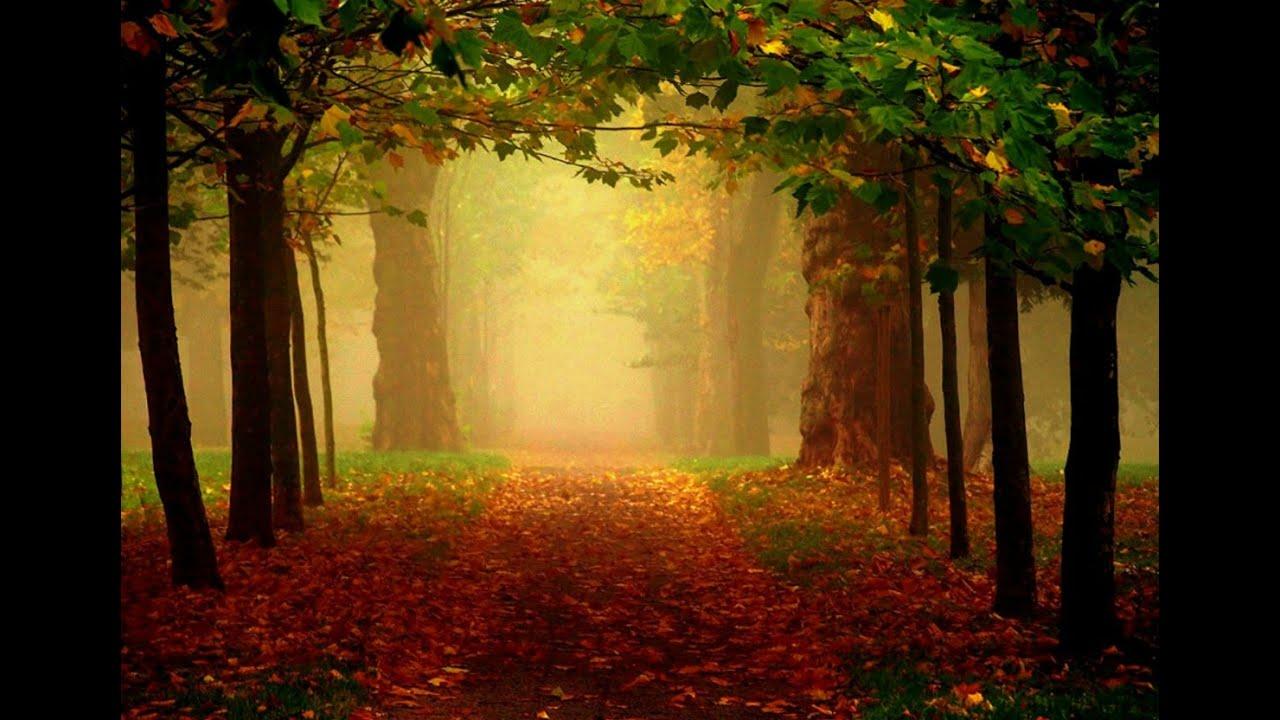 Red Fall Leaves Iphone Wallpaper Medita 231 227 O Mindfulness Aceitando Pensamentos E Sentimentos