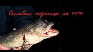 Оставил жерлицы на ночь на реке Рыбалка на живца