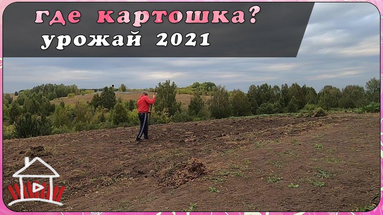 Урожай картошки 2021. Будни деревенщины.  (Live Video)
