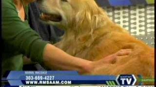 Dog Massage With Rocky Mountain School Of Animal Acupressure And Massage