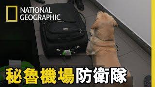 緝毒犬是機場防衛隊的好朋友,憑藉著牠們敏銳的嗅覺總能準確的找到可疑的行李 【祕魯機場防衛隊】短片精華版